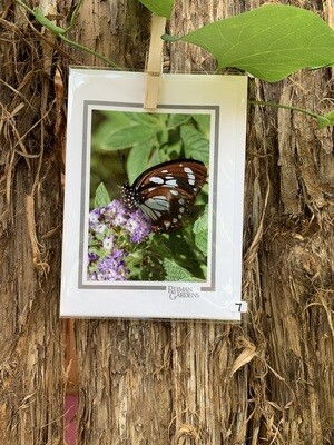 *Card - Brown and White Butterfly Purple Flower