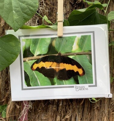 *Card -  Black Butterfly with Yellow Stripe