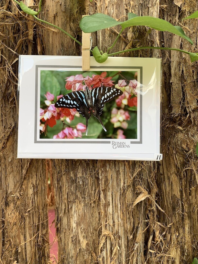 *Card - Black and Pale Aqua Butterfly Pink Flower