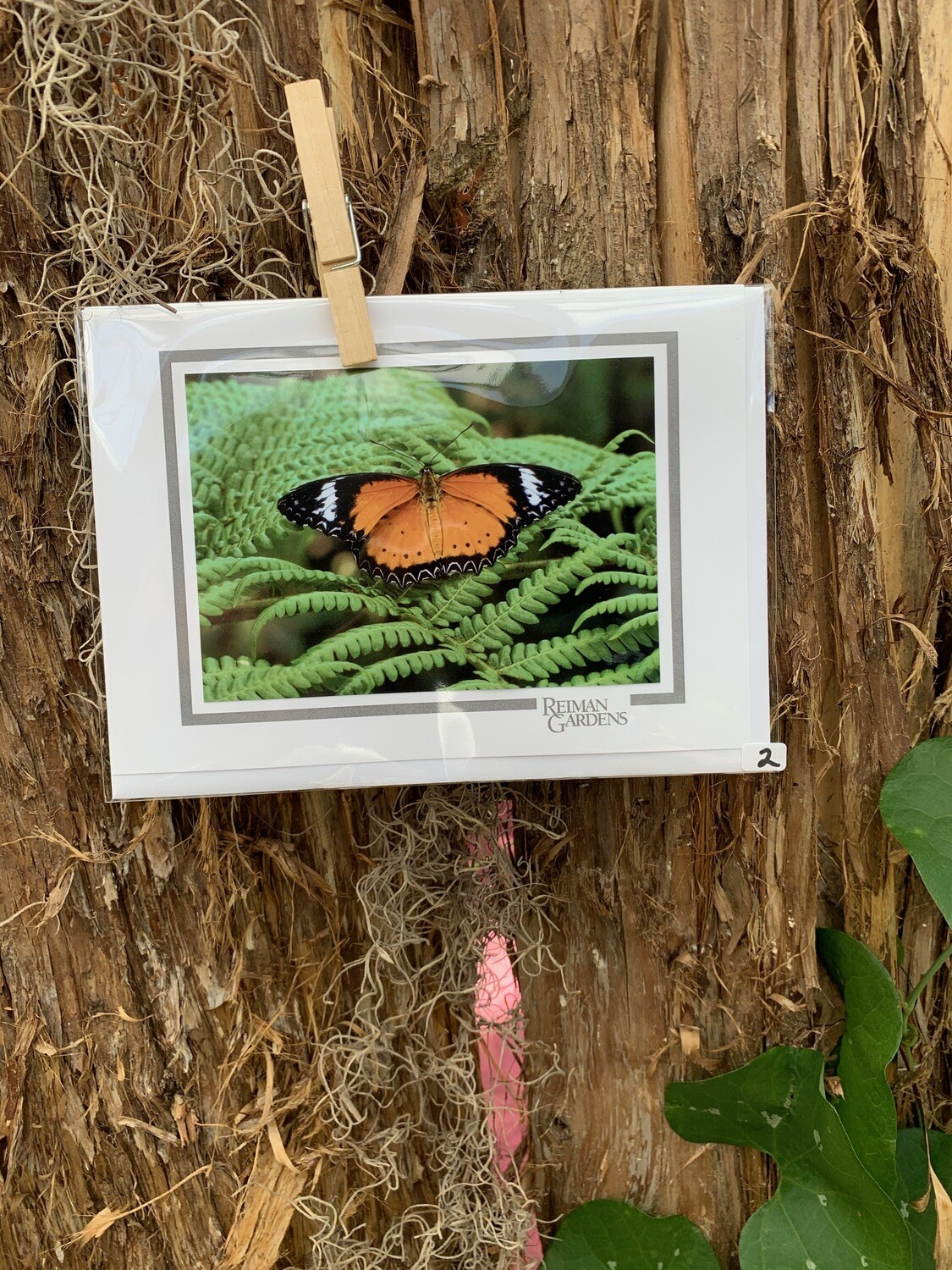 *Card - Black and Orange Butterfly with White Bands on Fern