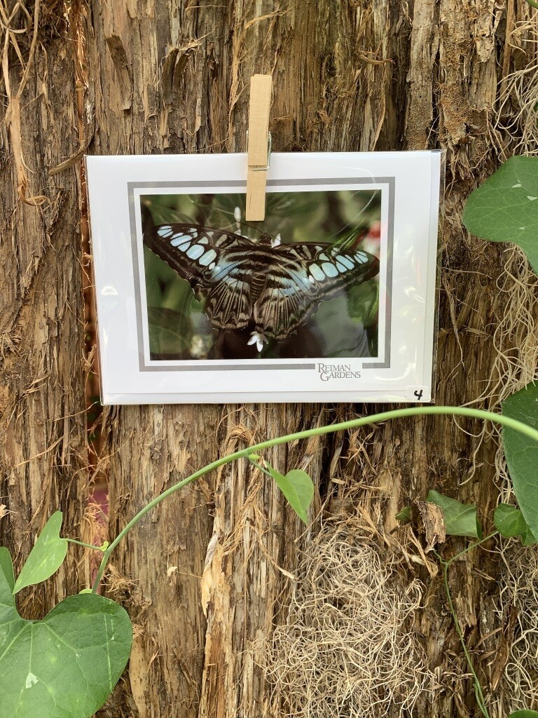 *Card - Black Butterfly with Pale Aqua Spots Brown Stripes