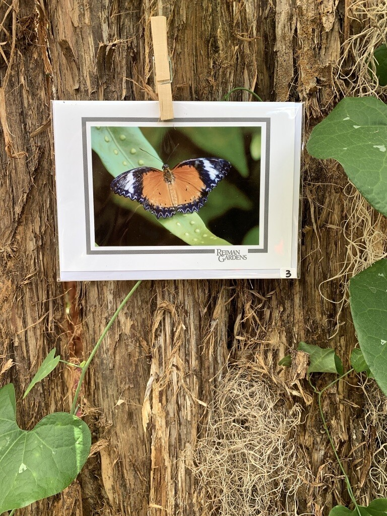 *Card - Black and orange butterfly with white bands