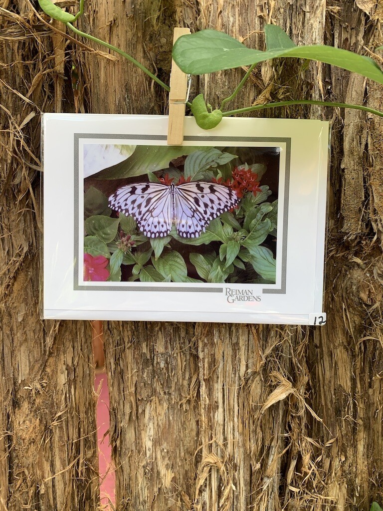 *Card - Lavender and Black Butterfly Red Flower