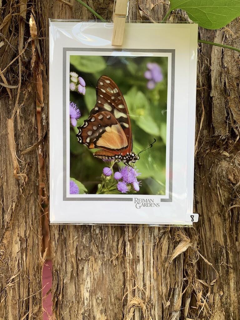 *Card - Brown/Orange/White Butterfly Purple Flower