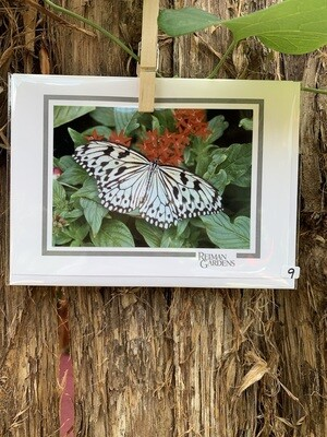 *Card - Black and White Butterfly Red Flower