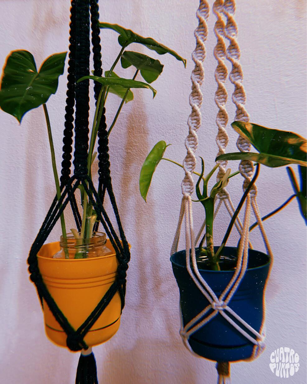 Colgante de plantas S