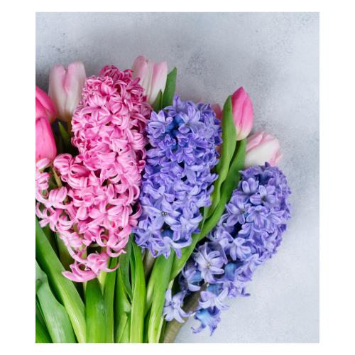 "Hyacinth 10"" Pot (9 blooms)"