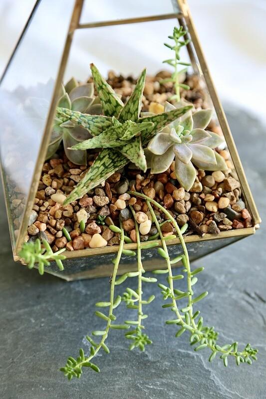 Little Succulent Gift