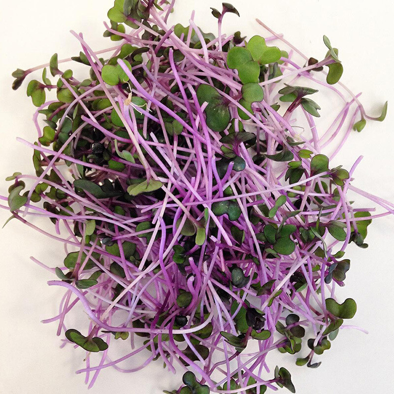 Red Cabbage 3oz