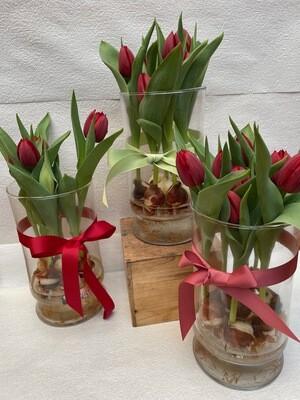 Tulip bulb vase