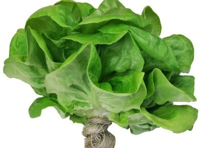 Leafy Solutions Living Lettuce