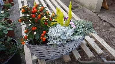 Blumen-Chorb mittlerer Grösse