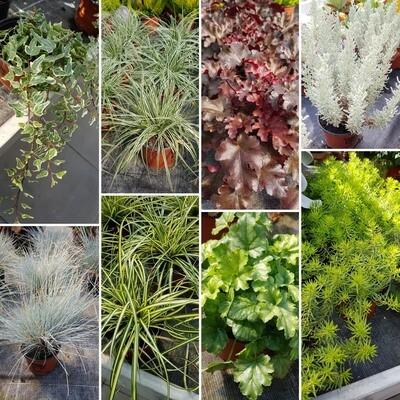 Gräser und Struktur-Pflanzen