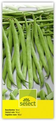 Samen von Select:  Hülsenfrüchte, Salat, Wurzelgemüse, Blumensamen, etc.