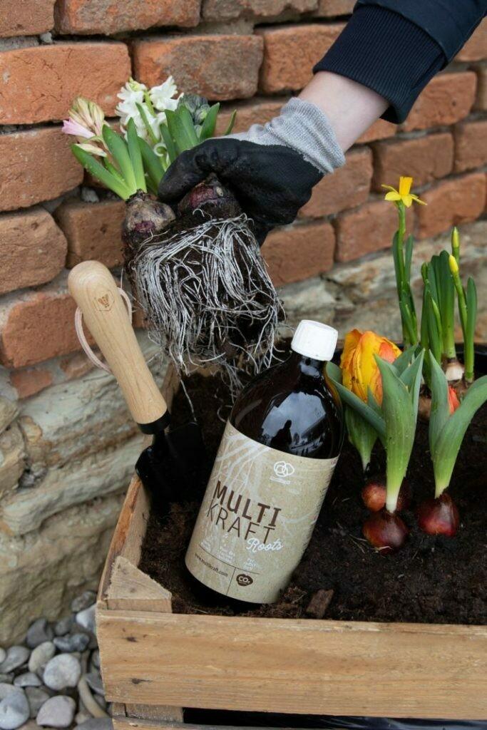 Pflanzenstärkungsmittel  Multikraft Roots