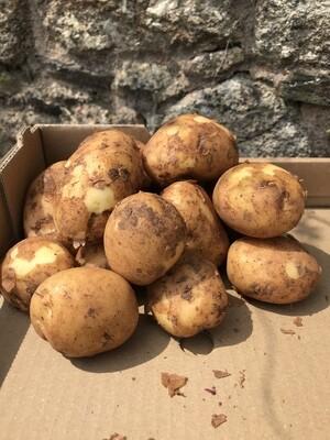 """New Season ""Cornish Potatoes"