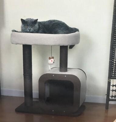 PetPals Group Cat Condo Pod