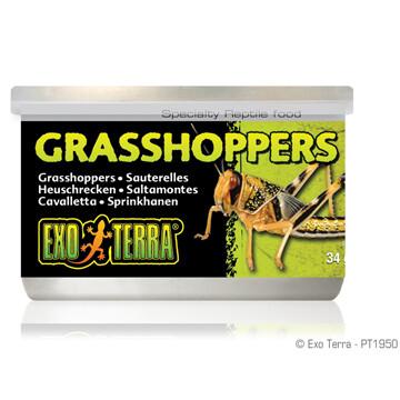 EXO TERRA CANNED GRASSHOPPEERS 34g