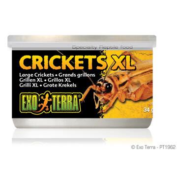 EXO TERRA CANNED CRICKETS XL 34g