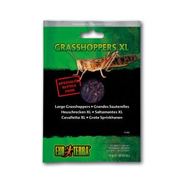 EXO TERRA VACUUM PACKED GRASSHOPPERS XL 15g