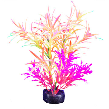 "Marina I-Glo Plant 5.5"" Pink/Orange"