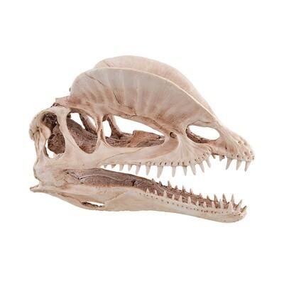 Underwater Treasures Dinosaur Skull
