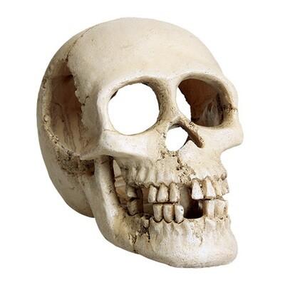 Underwater Treasures Skull
