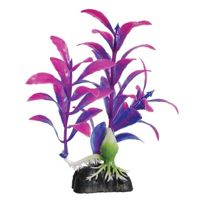 Underwater Treasures Mini Hygro Purple