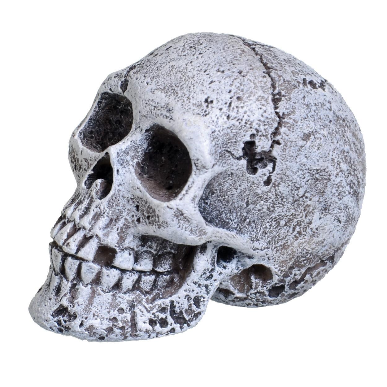 Underwater Treasures Mini Skull