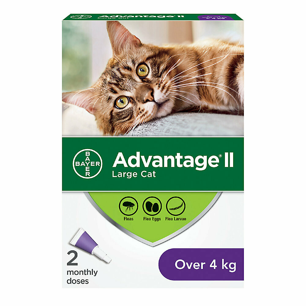 ADVANTAGE II FOR CATS OVER 4KG 2 DOSE