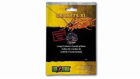 Exo-Terra Crickets XXL 15g