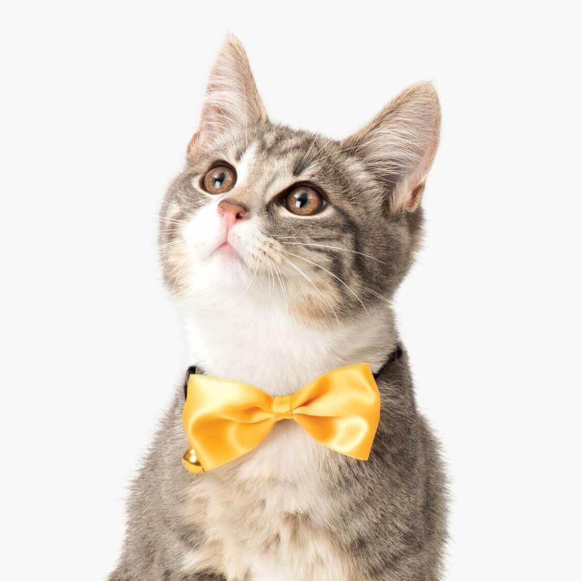 Catit Bow Tie Collar