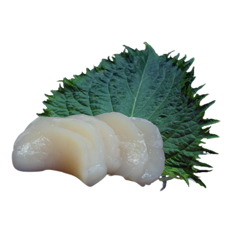 Hotategai/ St.jacobschelp sashimi