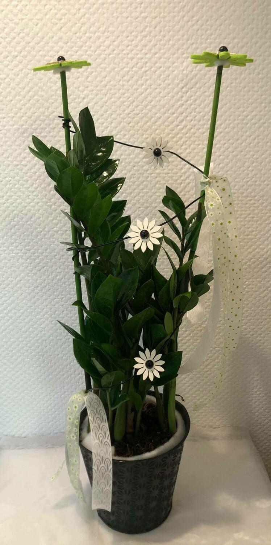 Zamioculcas décoré