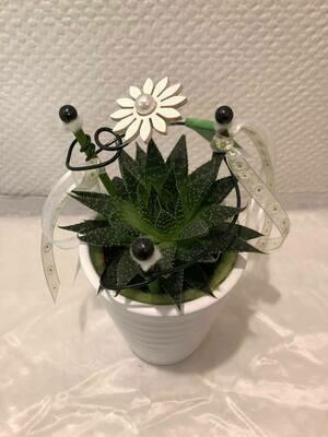 Plante grasse, cactacées décorée