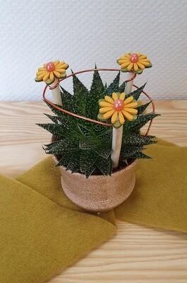 Plante grasse décorée