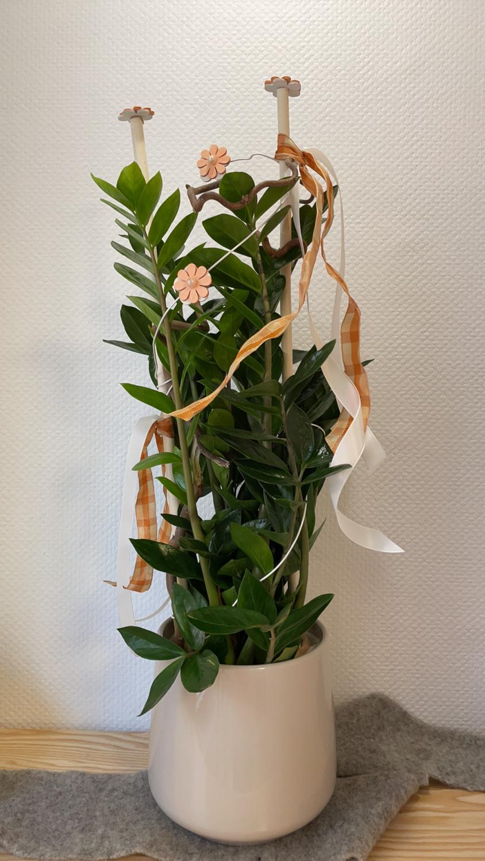 Zamioculcas décorée