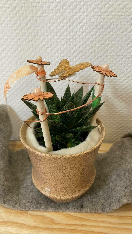 Aloé décorée avec son cache pot