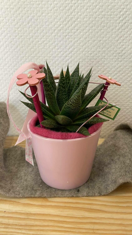 Aloé décoré avec son cache pot