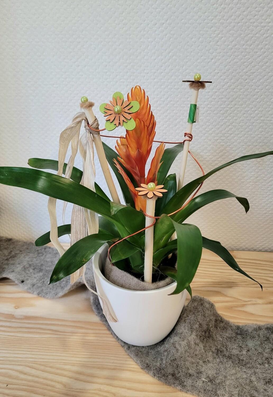 Vriesia décoré