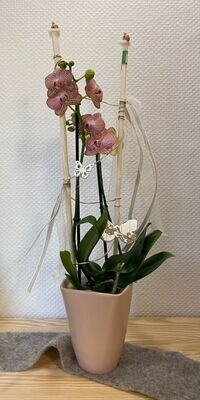 Orchidée décoré