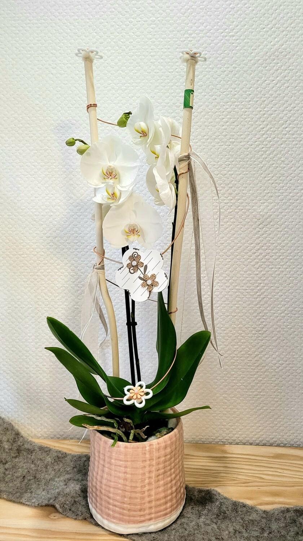 Orchidée blanche décorée