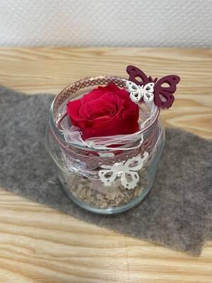 Rose éternelle rose vase transparent