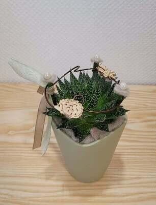 Plante grasse décoré