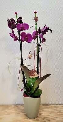 Orchidée décorée