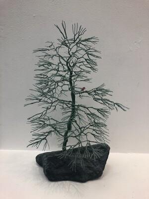 Wintergreen Tree