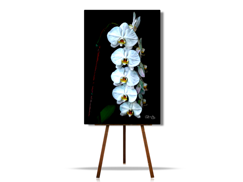 Waterfall of White Orchids, Flower Art, Floral Art, Floral Canvas Wall Art