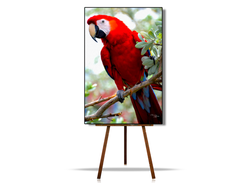 Scarlet Macaw | Parrot | Original Artwork | Digital Painting | Canvas Print | Wall Art | Bird Lover Gift | Wonderful Colors and Texture