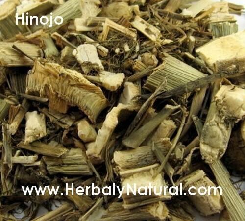 Hinojo - Planta