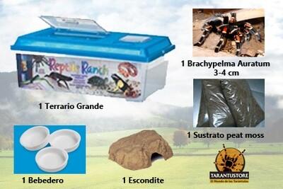 Kit COMPLETO para primer tarántula (Grande)